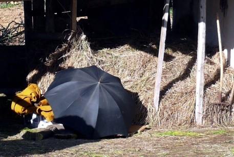 echando-la-siesta-pantin-08-02-2008.jpg