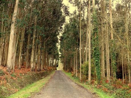 estrada-da-fraga-08-01-2008-001.jpg