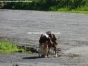 cans-namorados-pantin-13-02-2009-f-goiriz-006
