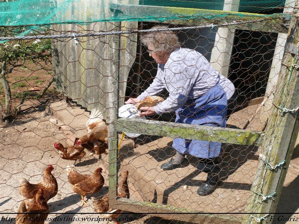Maruja do canarias ferm n goiriz d az - Casas para gallinas ...