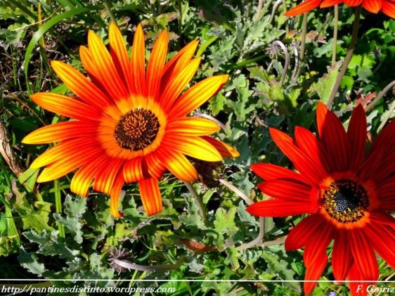margaritas-pantin-20-04-2009-f-goiriz-005-1