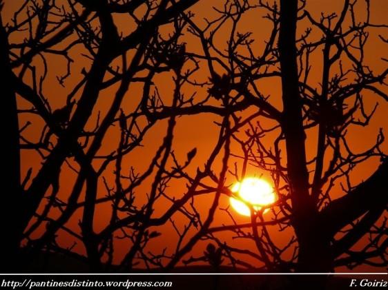 ocaso-pantin-31-03-2009-f-goiriz-062