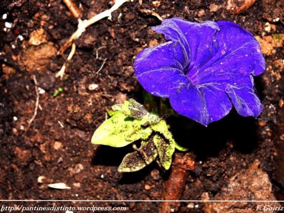 petunia-pantin-22-04-2009-f-goiriz-005