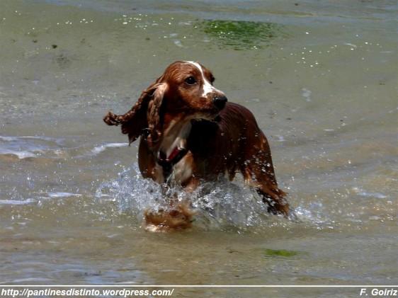 Leo bañándose en el océano - Pantín 22-06-09 - F. Goiriz