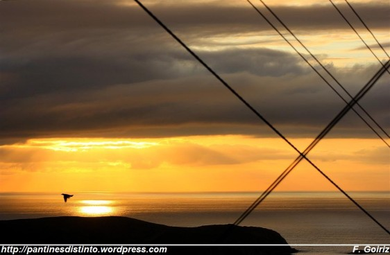 Anochecer cableado con cuervo en tránsito - Pantín - F. Goiriz (Large)