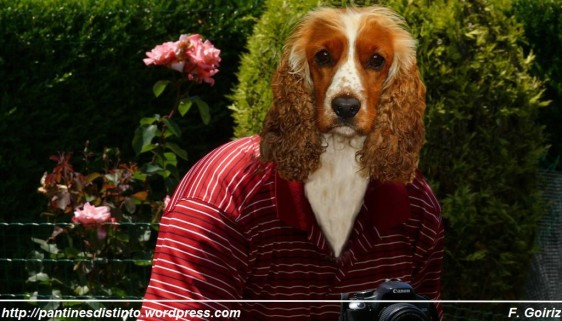 leo - perra  fotógrafo -fotomontaje - F. Goiriz