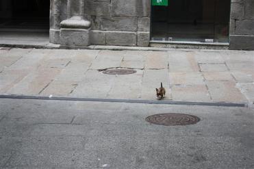 Canciño pola rúa Pastor Díaz - Viveiro - 2009 - f. goiriz (27)