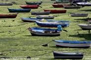 Embarcaciones varadas en A Ribeiroa (Barallobre - Fene) - F. Goiriz 07-09-2009 (2)