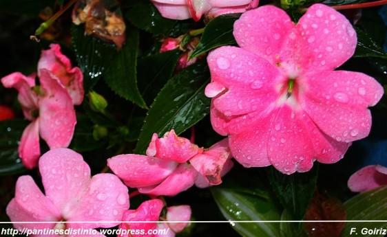 Alegrías bajo la lluvia - foto f. goiriz (Large)