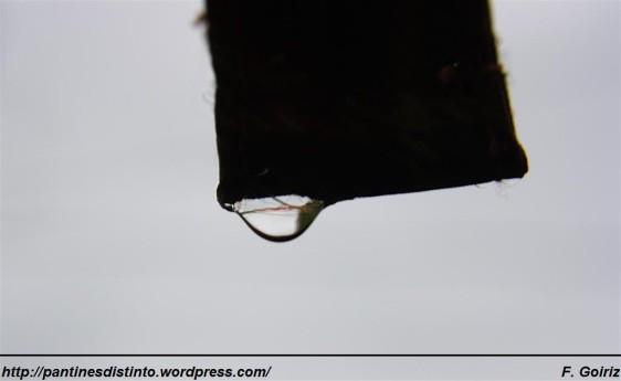 Gota de lluvia - foto F. Goiriz (3)