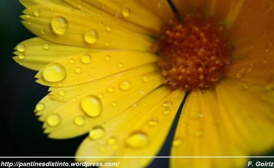 Margarita bajo la lluvia - foto F. Goiriz (Large)