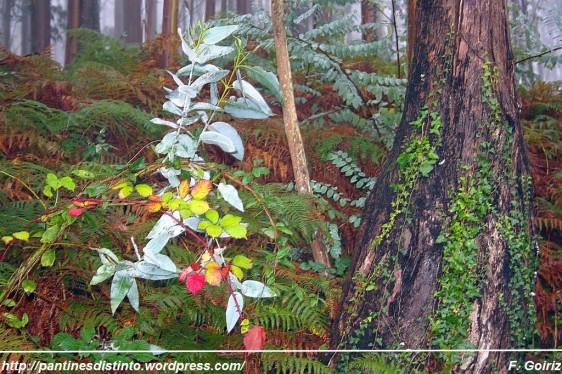 Paseo por el bosque a las 17 h +- - 10-10-2009 - foto F. Goiriz (2)