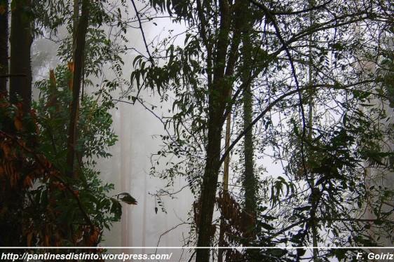 Paseo por el bosque a las 17 h +- - 10-10-2009 - foto F. Goiriz (3)