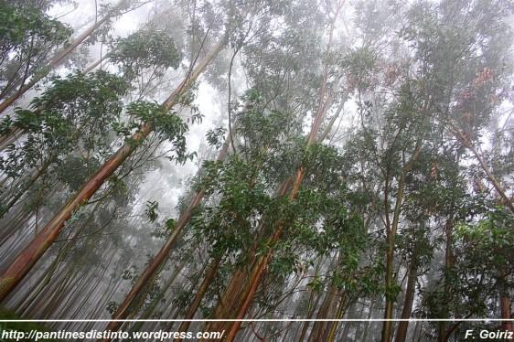 Paseo por el bosque a las 17 h +- - 10-10-2009 - foto F. Goiriz (4)
