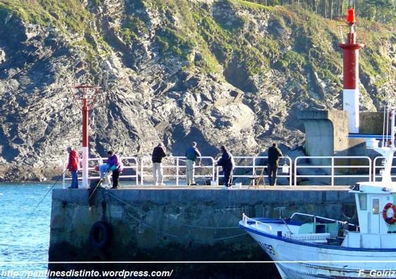 pescando en el puerto de cedeira - foto f. goiriz