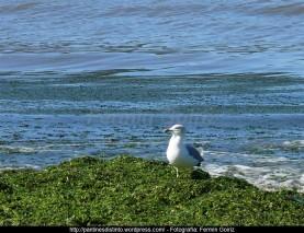 Otoño en Cedeira - fotografía, imaxe, photo, picture por Fermín Goiriz (Octubre 2010) (25)