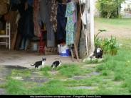 Otoño en Cedeira - fotografía, imaxe, photo, picture por Fermín Goiriz (Octubre 2010) (8)