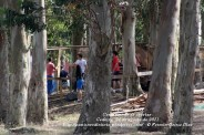 LUGNASAD 2011 - CONSTRUCCIÓN DAS CASETAS DOS CLANS - CEDEIRA 24 DE AGOSTO DE 2011 - FOTOGRAFÍA POR FERMÍN GOIRIZ DÍAZ (16)