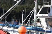 Pesquero de Cedeira INMACULADA ZARPANDO PARA LA COSTERA DEL BONITO - Cedeira, 31 de julio de 2011 - Galicia - fotografía por Fermín Goiriz Díaz (6)