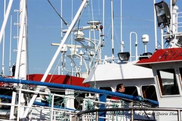 Pesquero de Cedeira INMACULADA ZARPANDO PARA LA COSTERA DEL BONITO - Cedeira, 31 de julio de 2011 - Galicia - fotografía por Fermín Goiriz Díaz