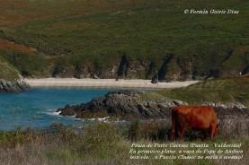 Playa de Porto Carrizo en primer plano a vaca de Pepe de Andrea (sin ela non sería o mesmo) - fotografía por Fermín Goiriz Díaz