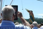 Procesión Marítima en honor de la Patrona de Cedeira - Cedeira, 16 de agosto de 2012 - fotografía por Fermín Goiriz Díaz (399)