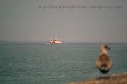 Procesión marítima en honor a la virgen del mar - Cedeira, 16-08-2013 - Fotografía por fermín Goiriz Díaz (6)