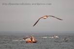 Procesión marítima en honor a la virgen del mar - Cedeira, 16-08-2013 - Fotografía por fermín Goiriz Díaz (67)
