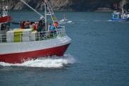Procesión marítima en honor a la virgen del mar - Cedeira, 16-08-2013 - Fotografía por fermín Goiriz Díaz (91)