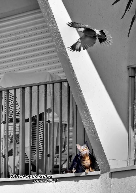 Instinto básico - fotografía por fermín goiriz díaz, julio 2013